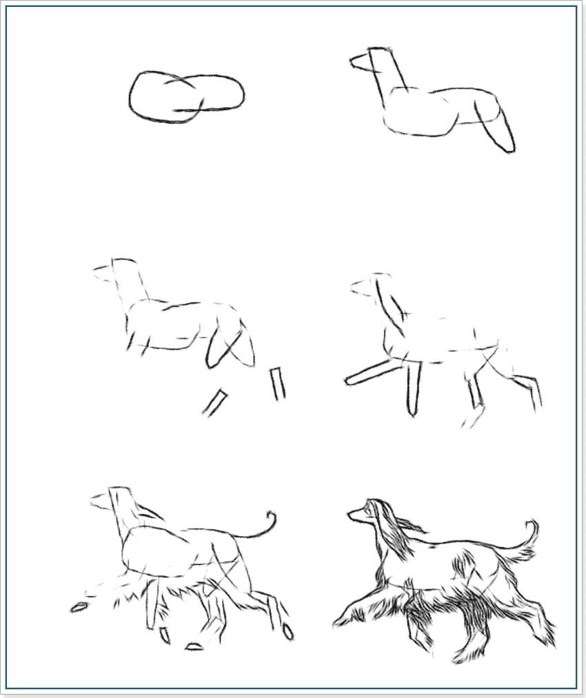 как рисовать волка карандашом поэтапно:
