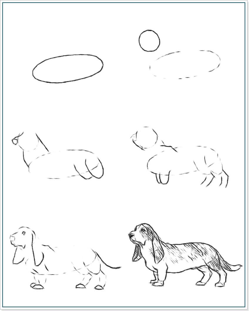 Как рисовать собаку породы Бассет