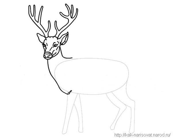изображение оленя: