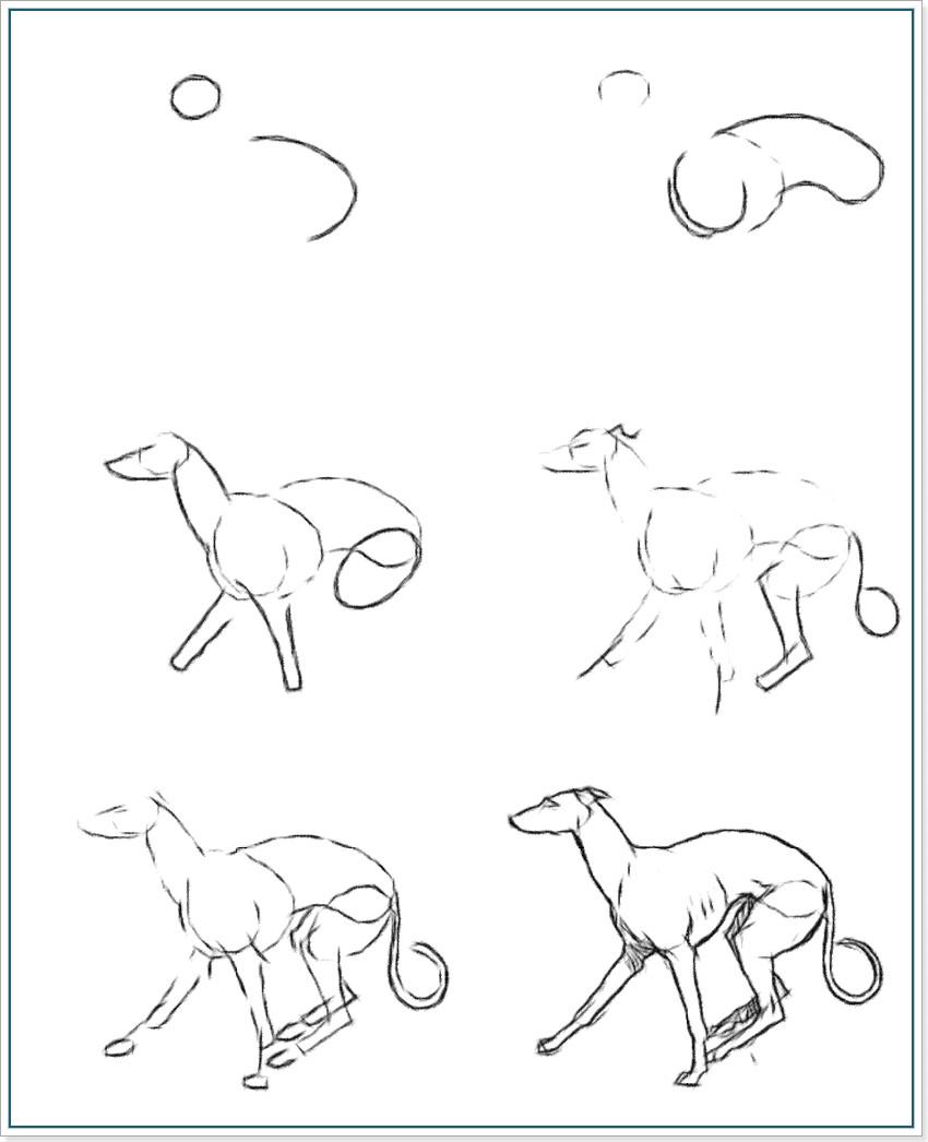 Как рисовать собаку породы