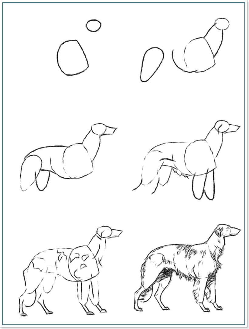Как рисовать собаку породы русская псовая борзая