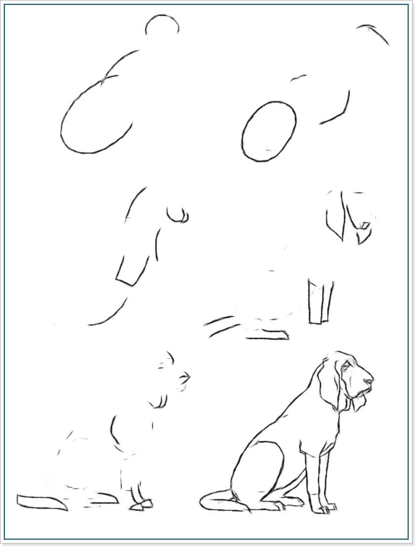 Как научиться рисовать собаку породы блюдгаунд