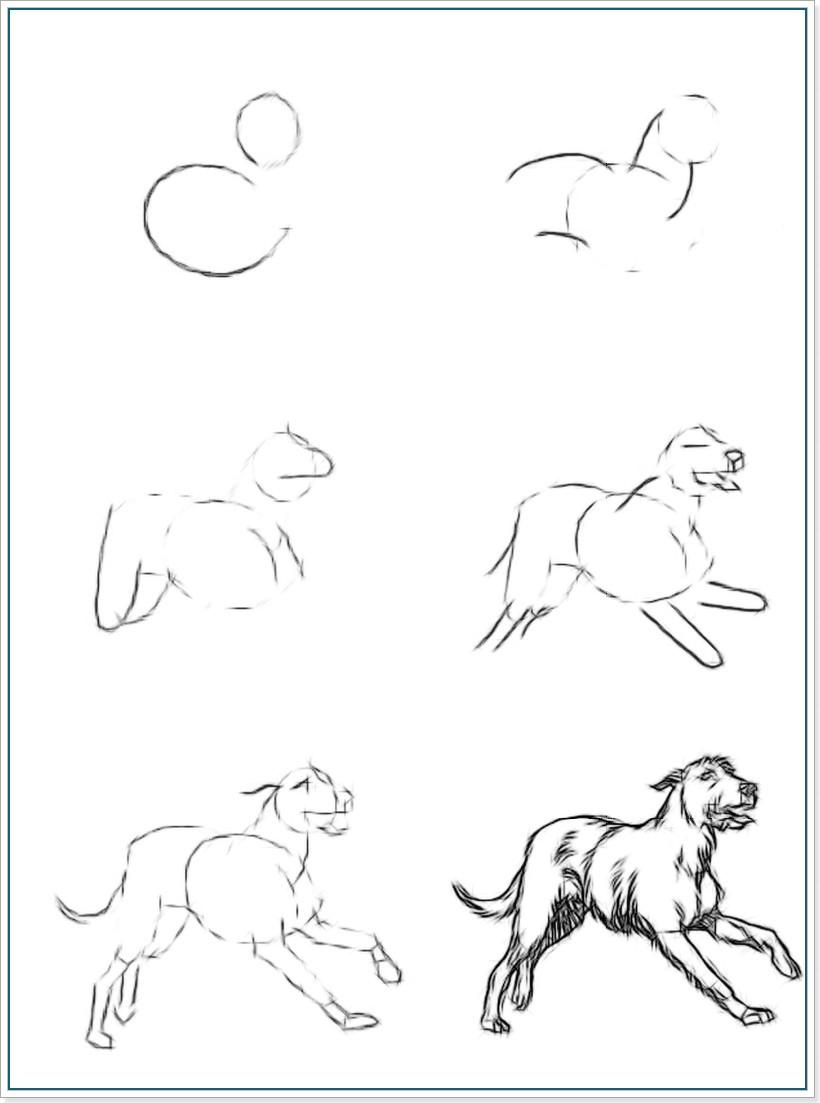 Как нарисовать ирландского волкодава