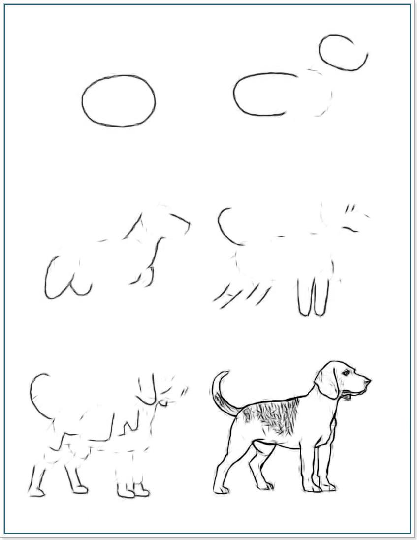 Учимся рисовать собаку породы бигль