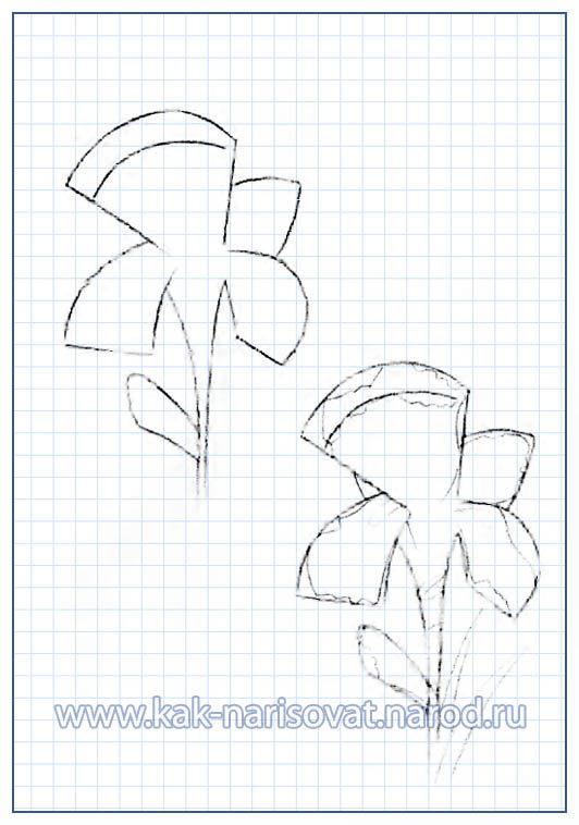 Нарисованный карандашом цветок - пример в картинках