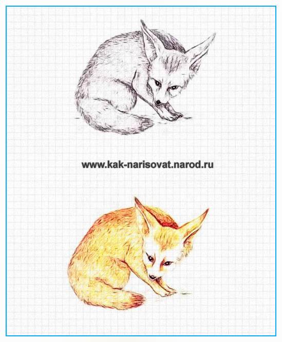 Как рисовать лисицу карандашом - пример в картинках