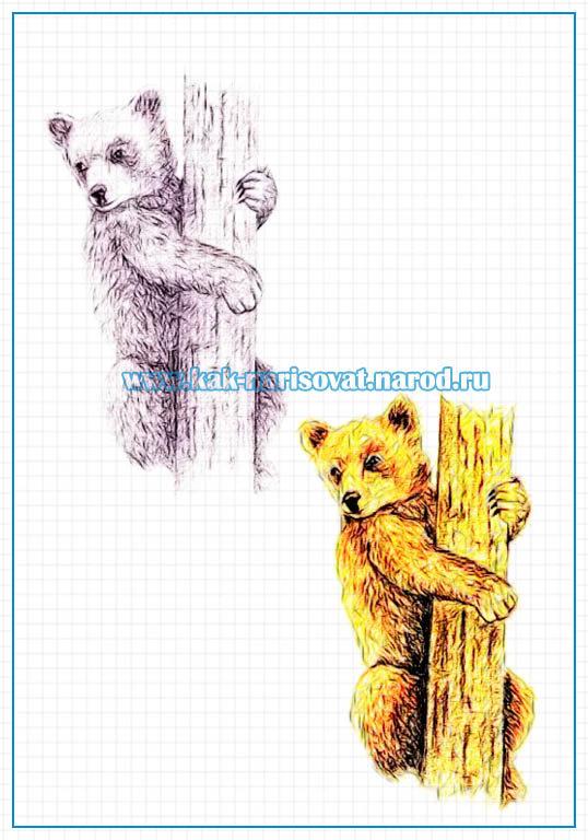 Нарисованные картинки с медвежатами