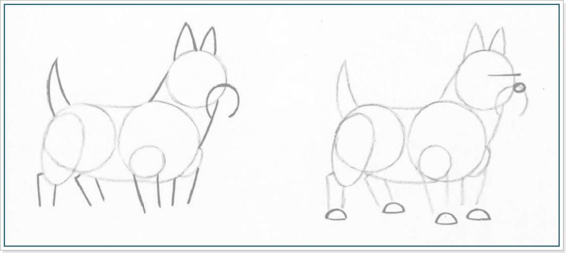 Как нарисовать йоркширского терьера поэтапно