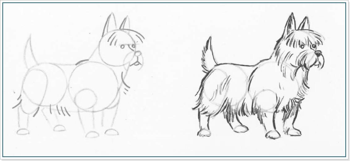 Учимся рисовать собаку - йоркширского терьера