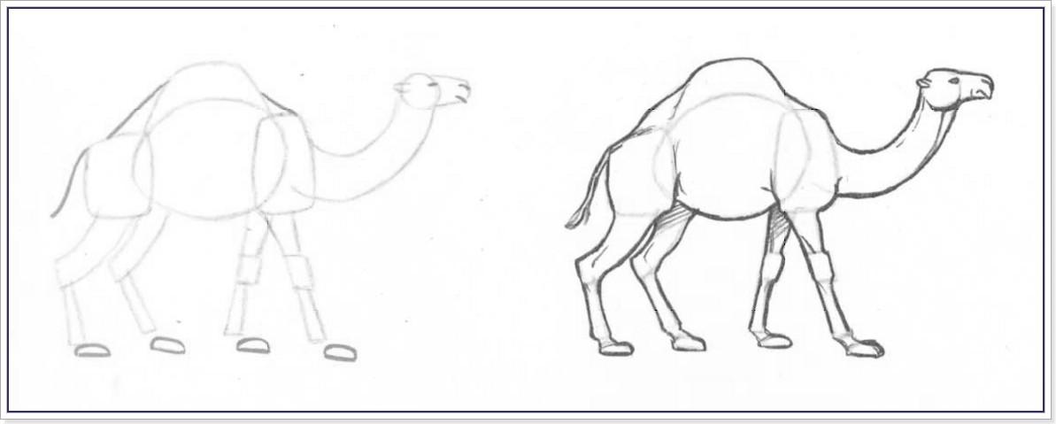 Как рисовать верблюда