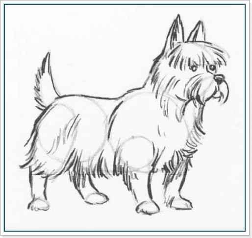 Учимся рисовать собаку