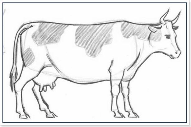 Как рисовать корову