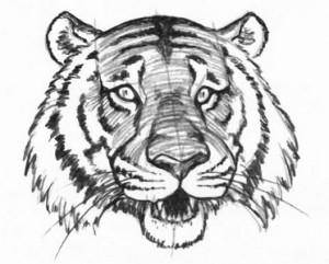 Как рисовать карандашом тигра