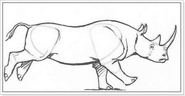 как рисовать носорога