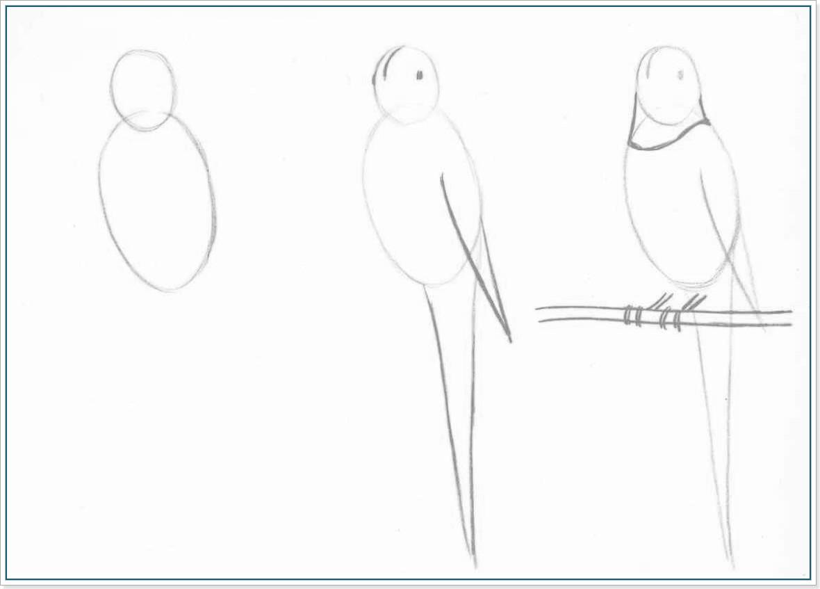 Как нарисовать попугая - Этап 1