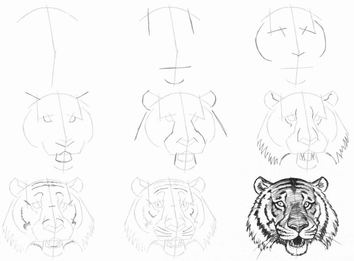 Как нарисовать поэтапно тигра