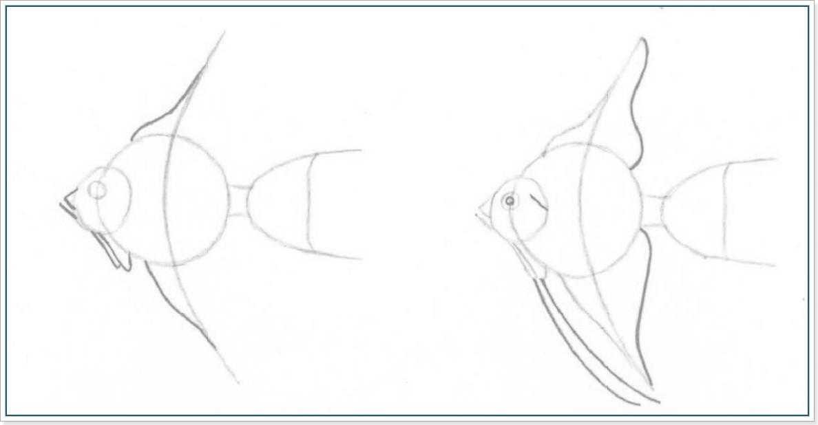 Как рисовать рыбок карандашом