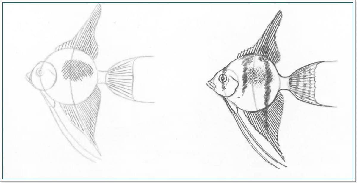 Как нарсиовать золотую рыбку