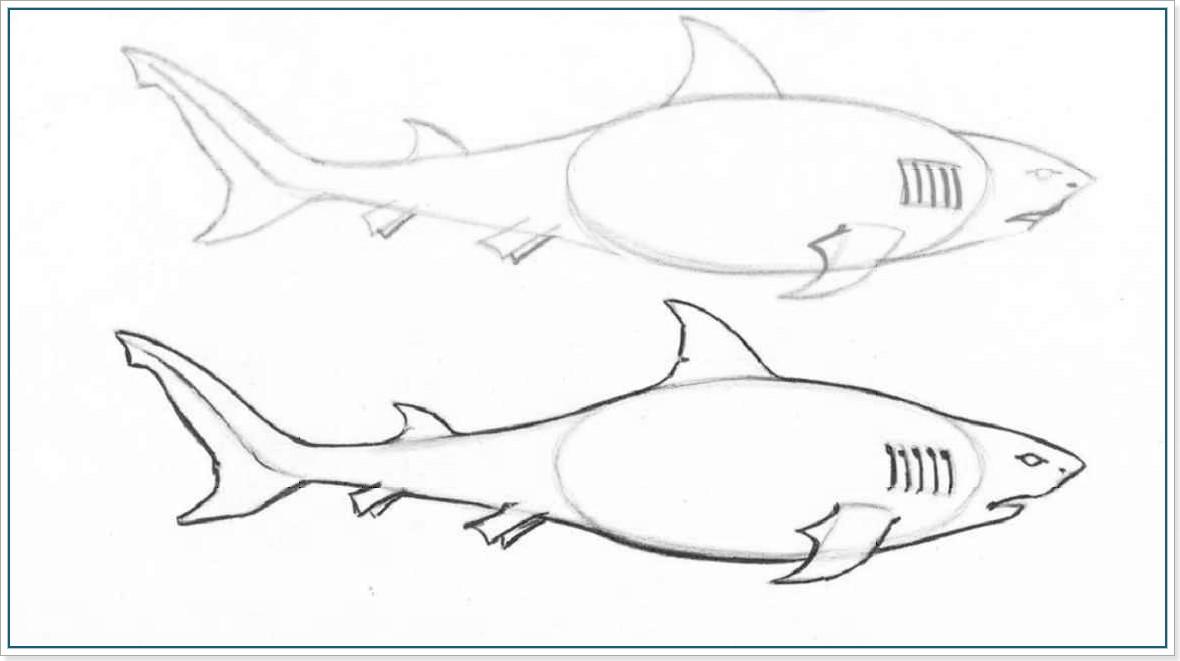 Как нарисовать акулу - этап 3
