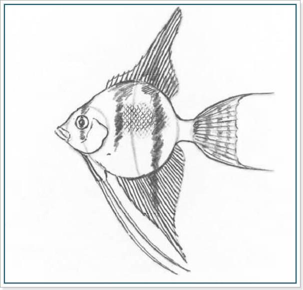Как рисовать золотую рыбку