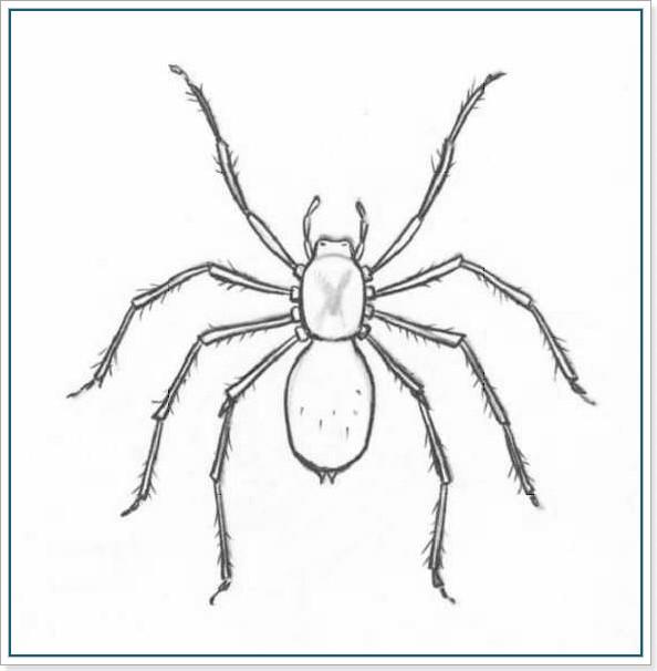 Рисуем паука карандашом