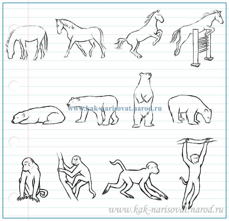 как нарисовать лошадь, белого медведя и обезьяну