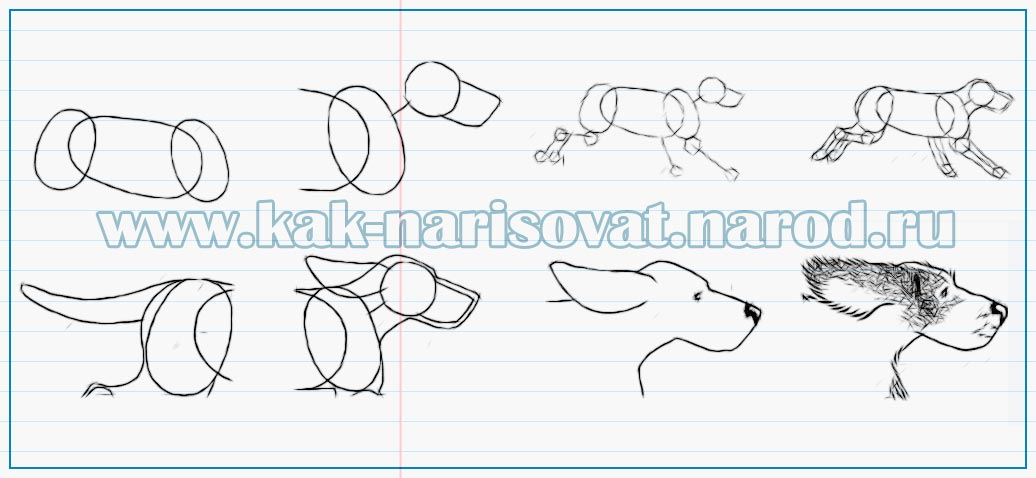 бегущая собака - картинка пример рисования