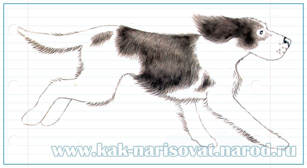 учимся рисовать собаку которая бежит карандашом - поэтапный пример