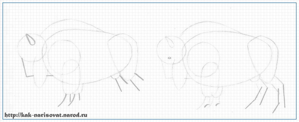 Как рисовать быков зубра или бизона