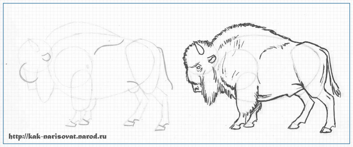 Как нарисовать быка, зубра, бизона