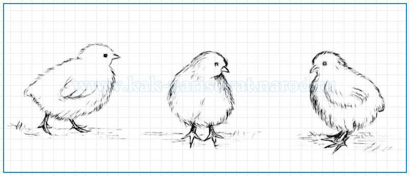 Поэтапный урок рисования цыплят в картинках