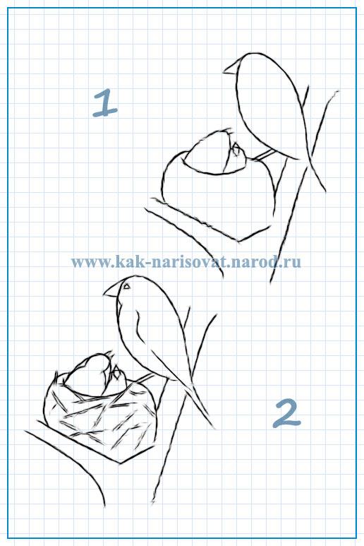 урок рисования птиц в гнезде