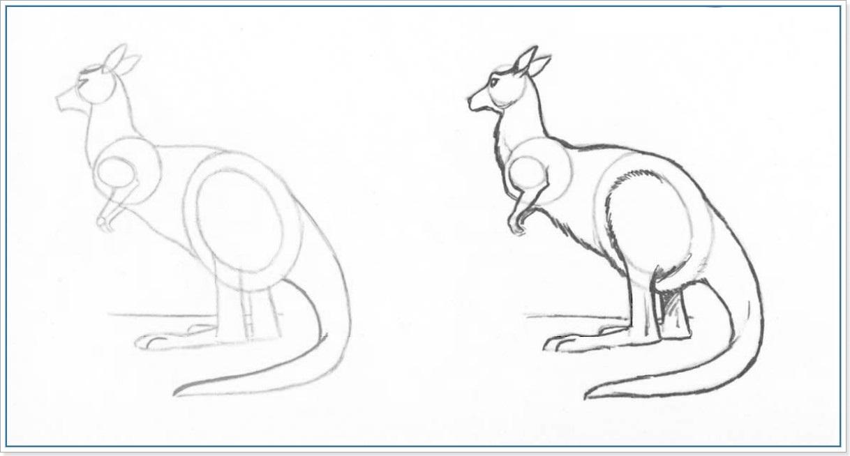 Как рисовать кенгуру карандашом