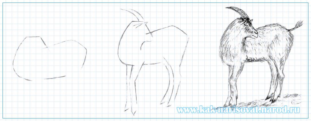 как карандашом нарисовать козу