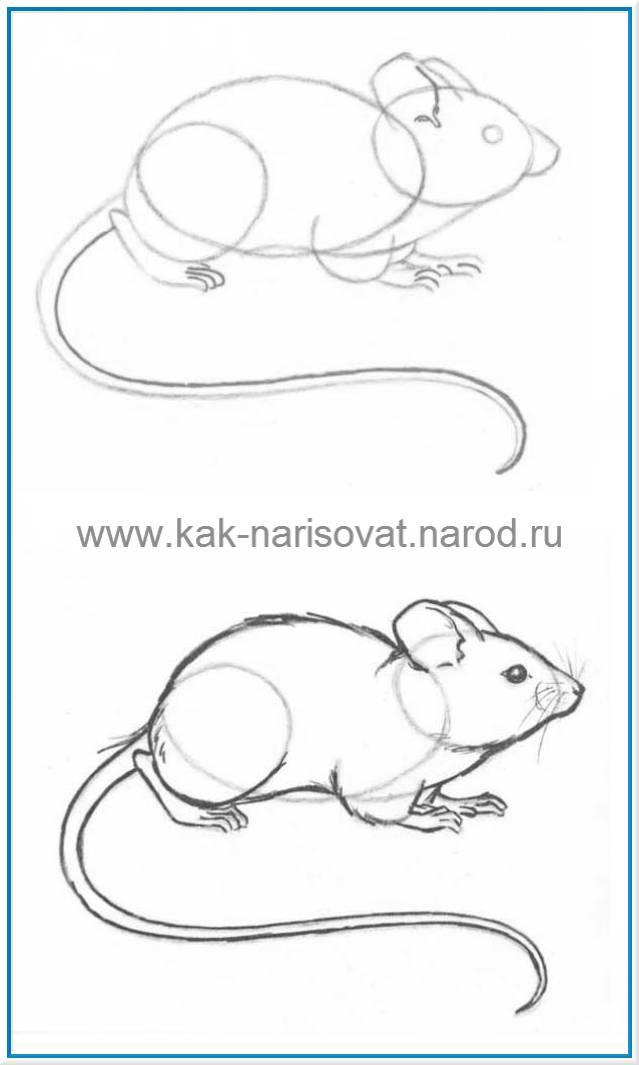Картинки нарисованных мышей