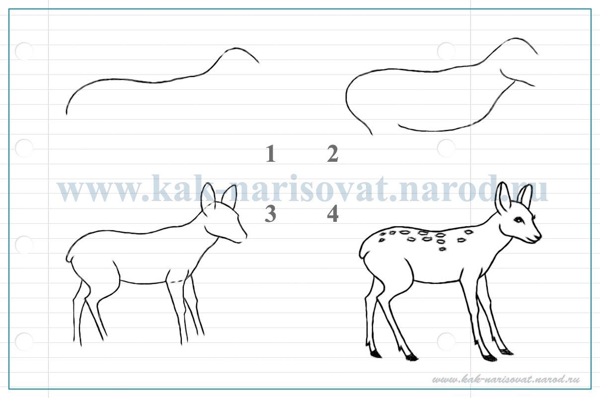 учимся рисовать детеныша оленя