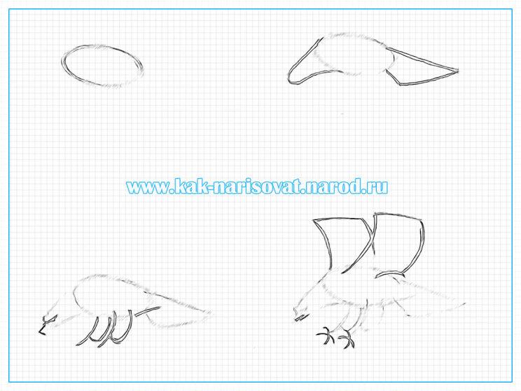 Учимся рисовать орла