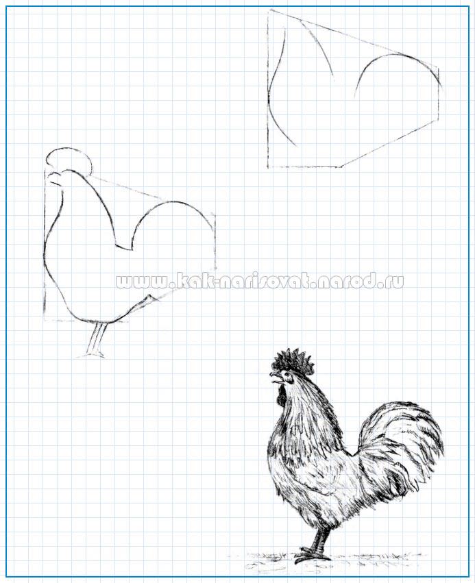 как рисовать петуха простым карандашом на бумаге