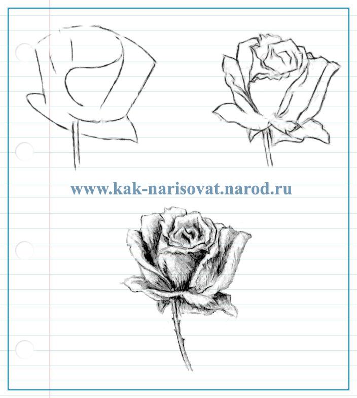 ec9f5fe3a14b Как поэтапно нарисовать розу карандашом (пример на бумаге) | Как ...