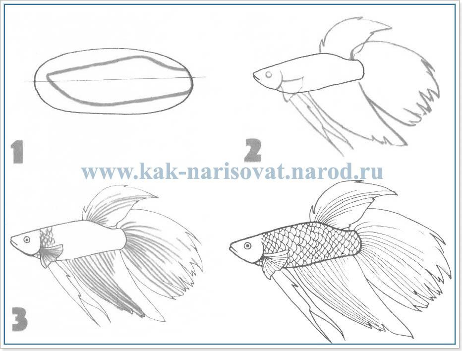 Как рисовать аквариумных рыбок
