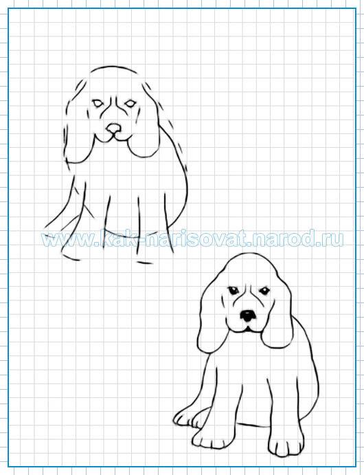 Учимся рисовать щенка карнадшом - поэтапный урок