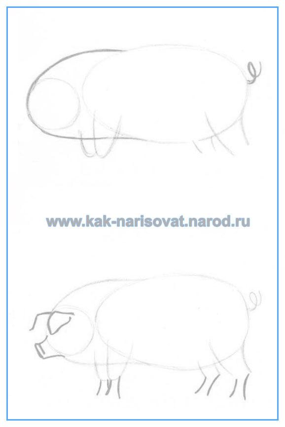 Как рисовать свинью карандашом