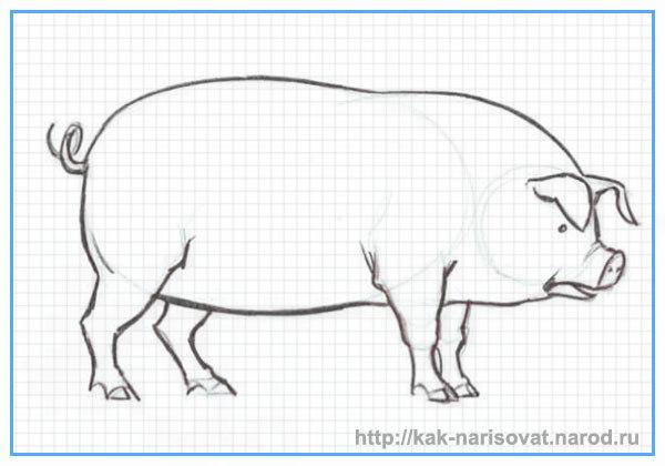 Как рисовать свинью