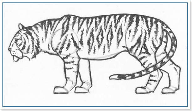 Учимся рисовать тигра карандашом