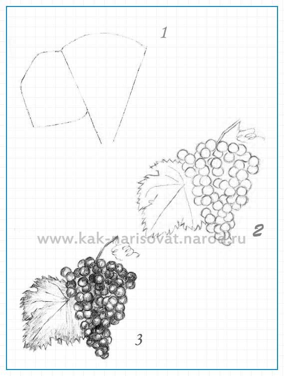 Учимся рисовать гроздь (кисть) винограда карандашом