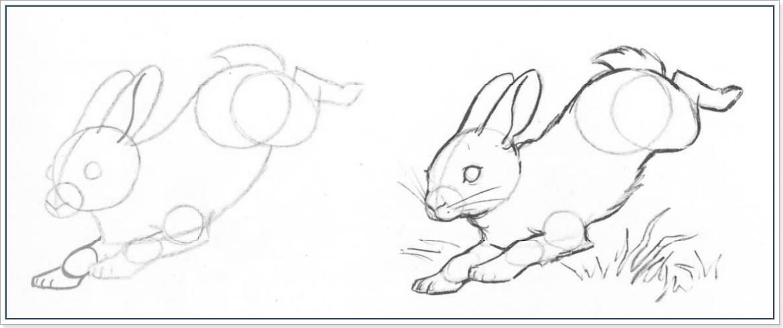 Как нарисовать кролика или зайца
