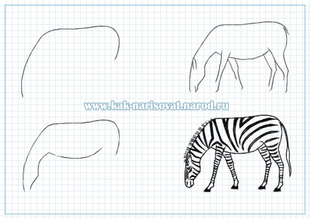 как поэтапно нарисовать зебру - картинки