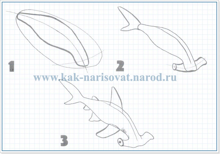 Как рисовать рыбу-молот