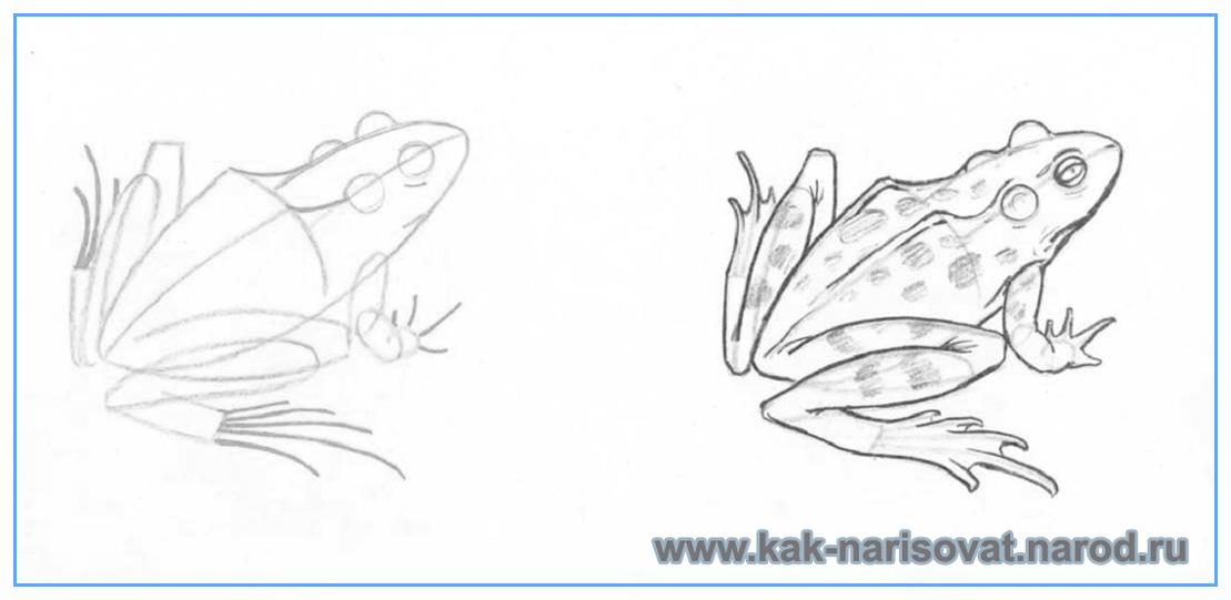 Как нарисовать лягушку (жабу)
