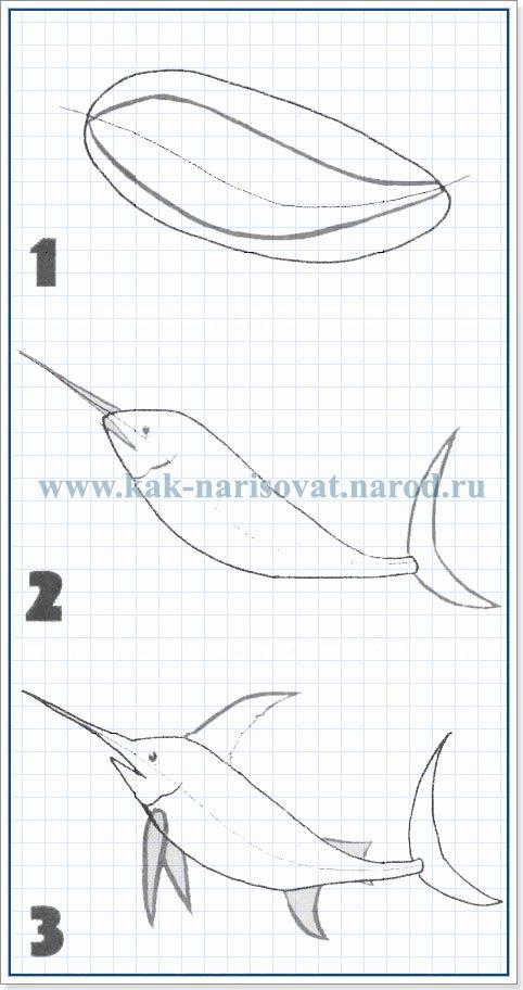 Как научиться рисовать рыбу меч